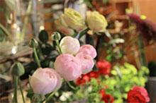 お花の特徴