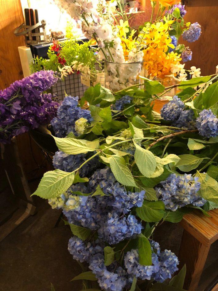 紫陽花に見惚れる季節ですね