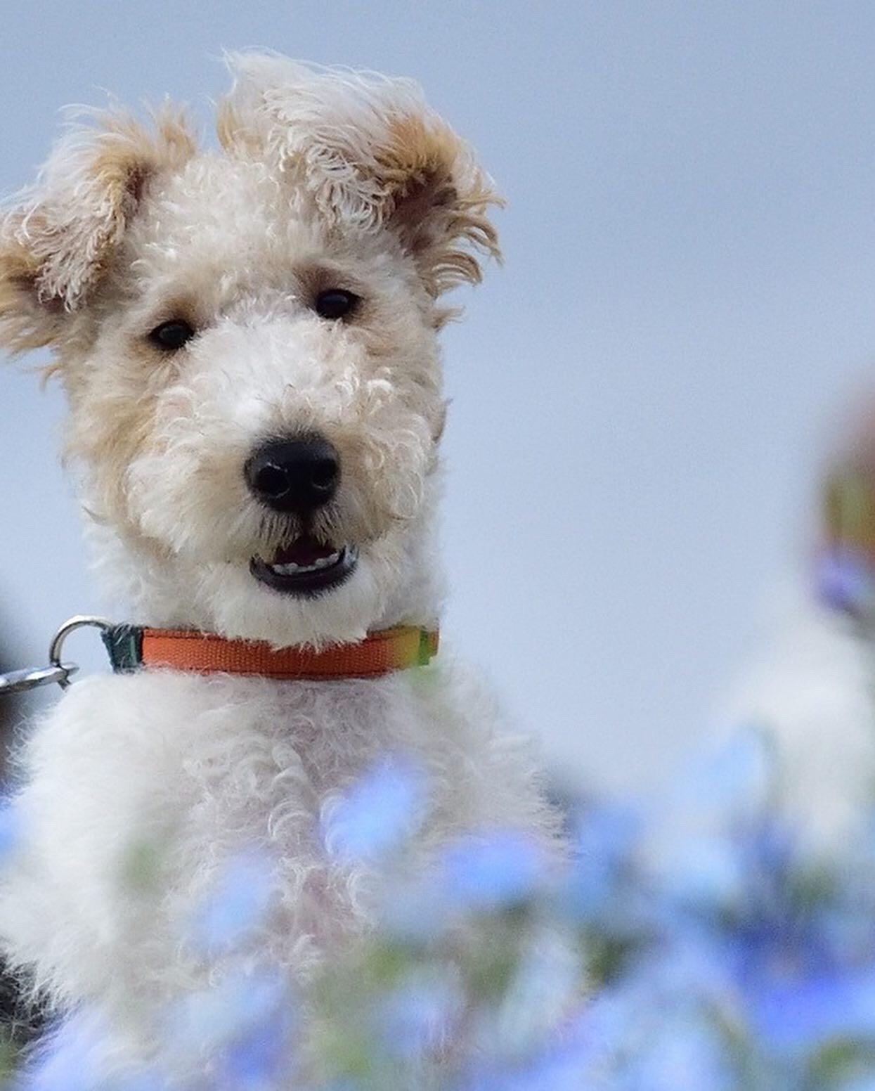 看板犬になれる日を夢みて・・・。