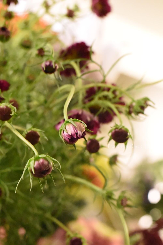 9/14(土)入荷のお花はドライのお花が揃っています