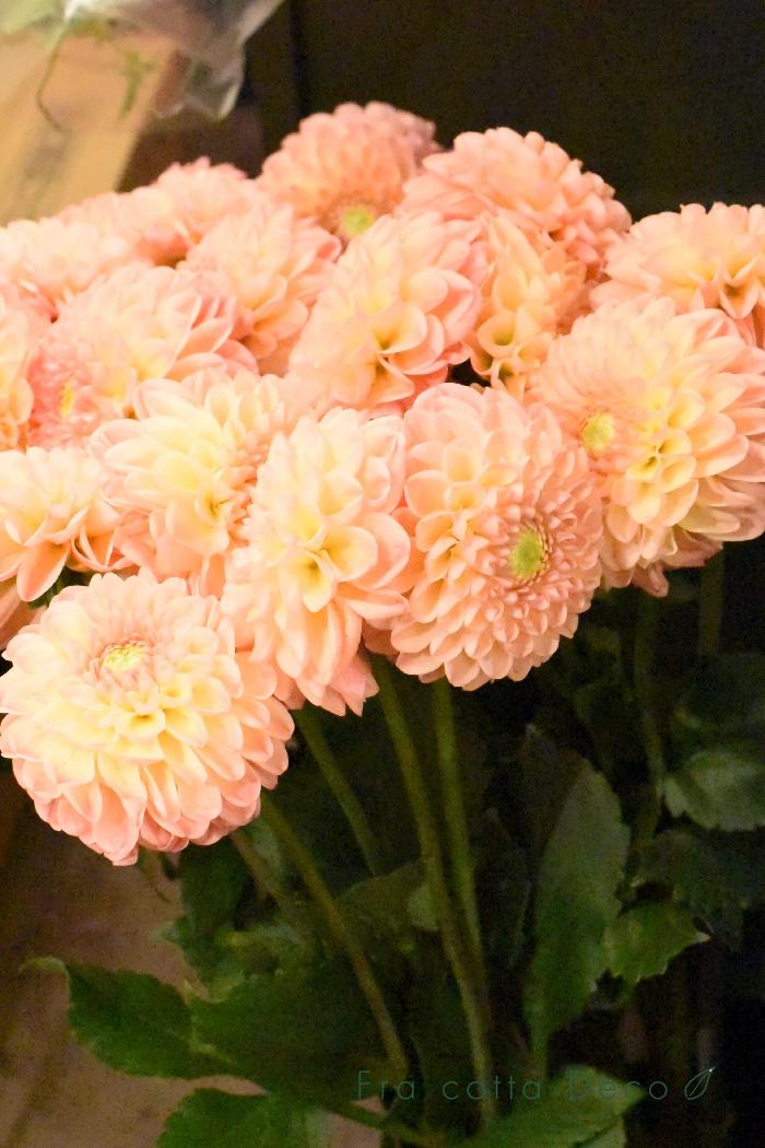 9月27日(金)本日入荷のお花