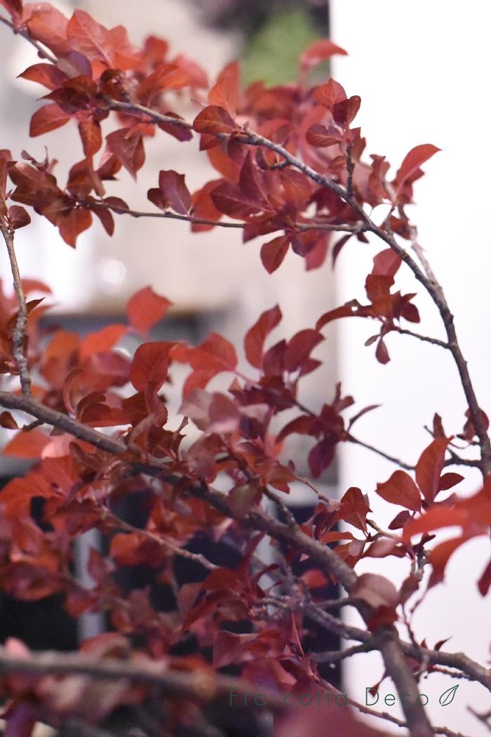 10月4日(金)本日入荷のお花