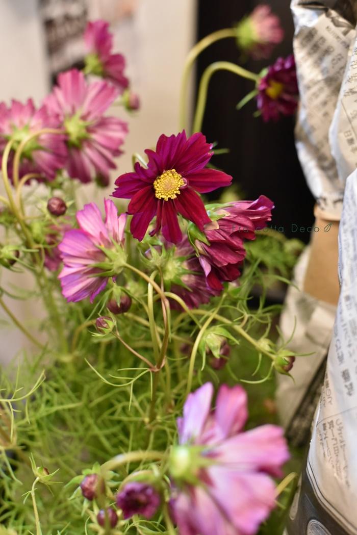 10月25日(金)本日入荷のお花