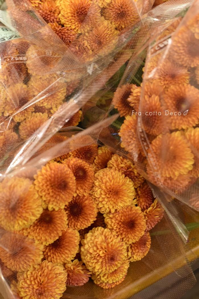 11月8日(金)本日入荷のお花