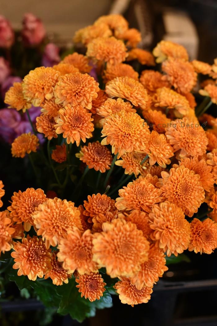 11月22日(金)本日入荷のお花