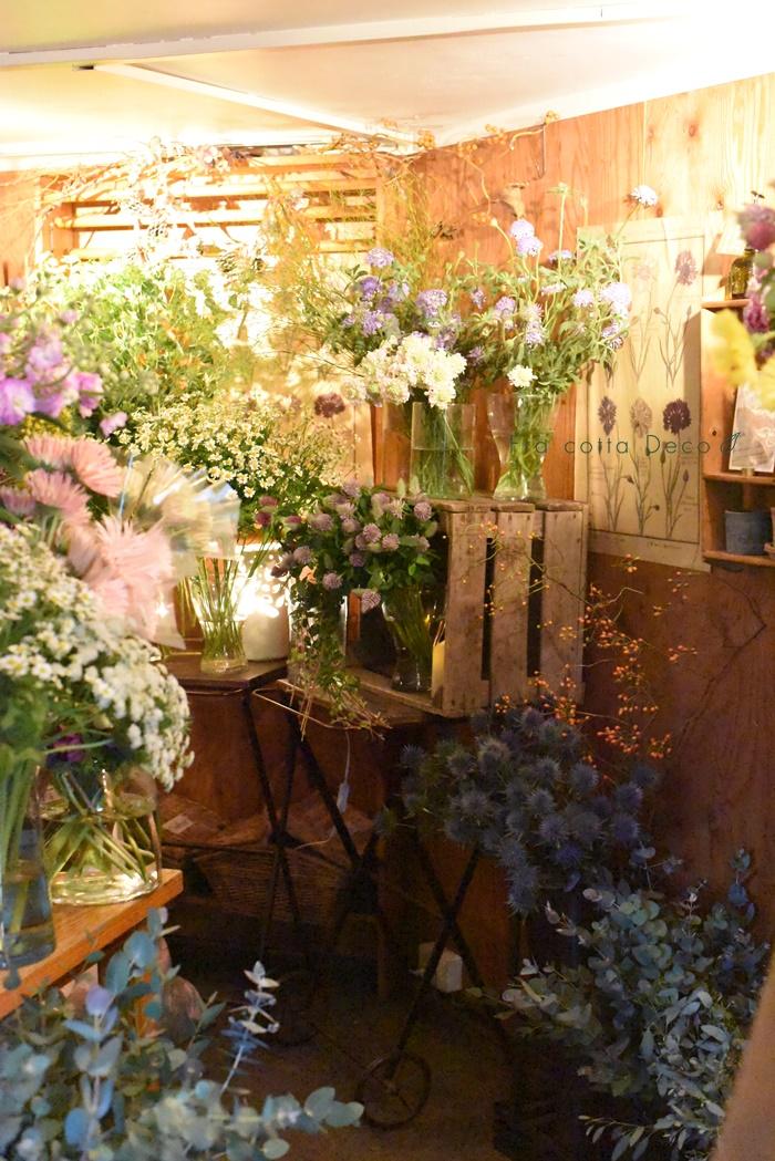 12月6日(金)一足早い、春を感じさせる花が沢山!!