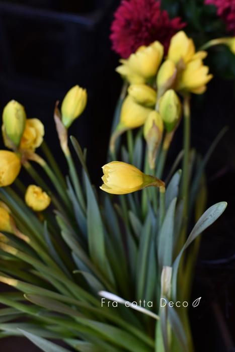 2020年1月17日(金)春の草花が入荷しています!