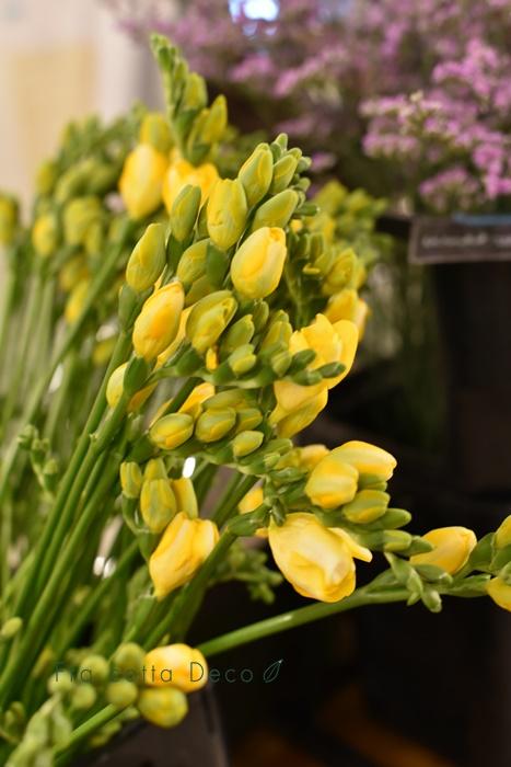 1月31日(金)本日も春の花が入荷しています