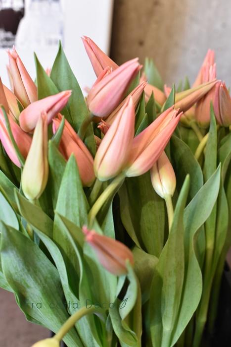 2月7日(金)本日入荷のお花