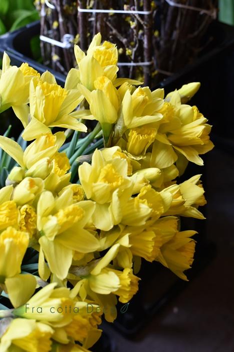 2月14日(金)本日入荷のお花