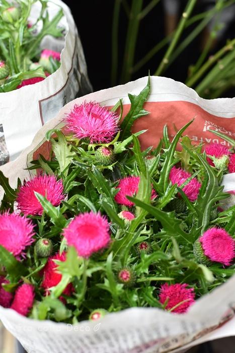 3月27日(金)店頭のお花のご紹介