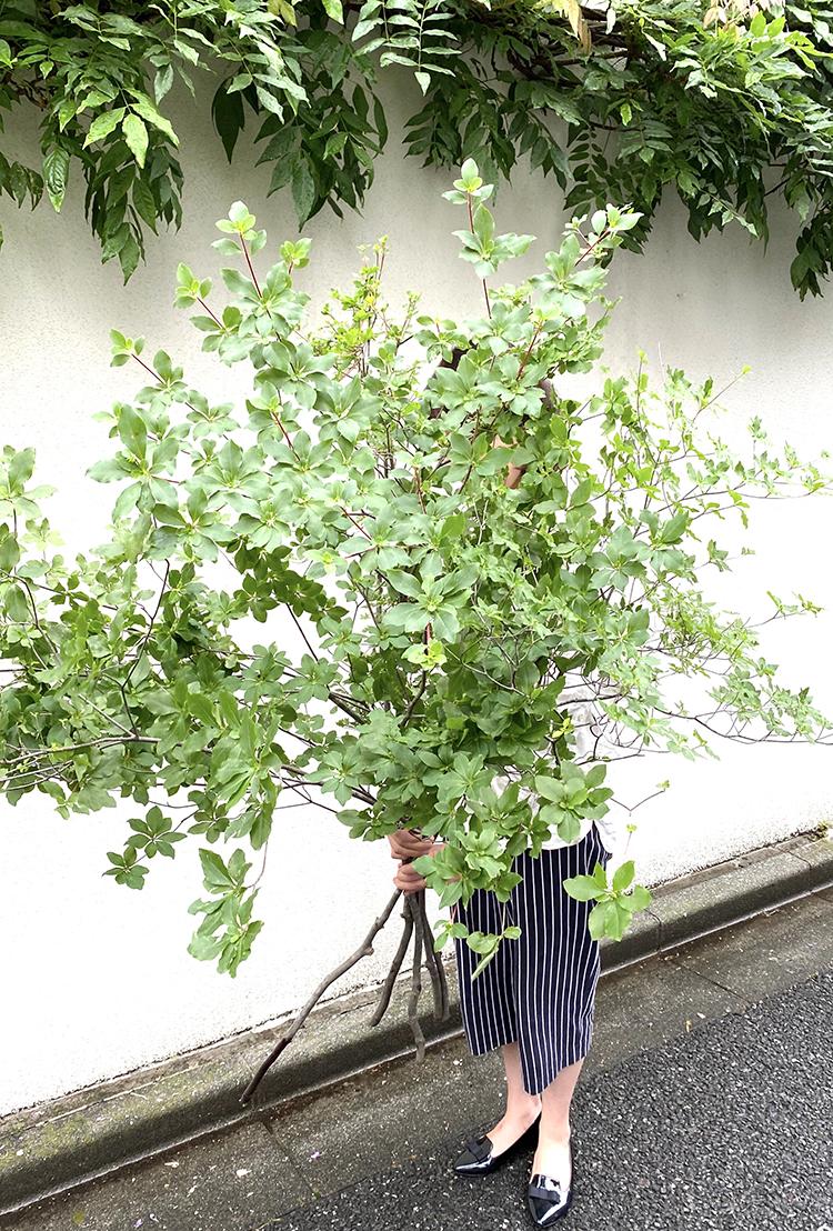 今週末はモフモフと長持ちな枝がオススメ