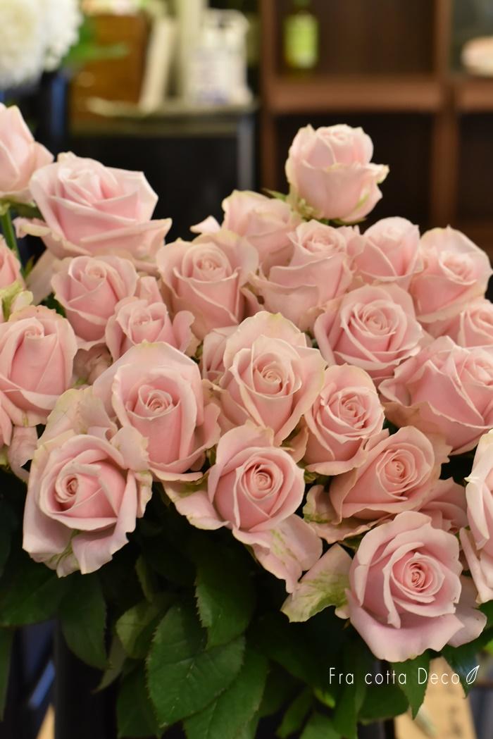 美しいバラが入荷しました