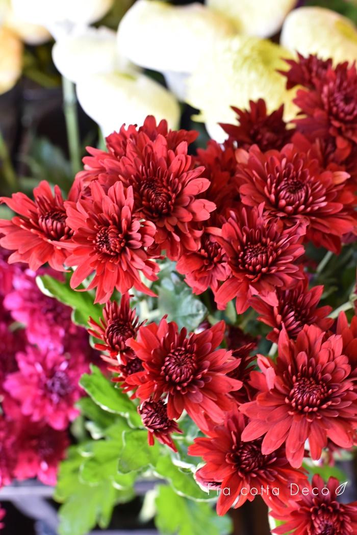 今週も赤や黄色のお花が入荷しています!