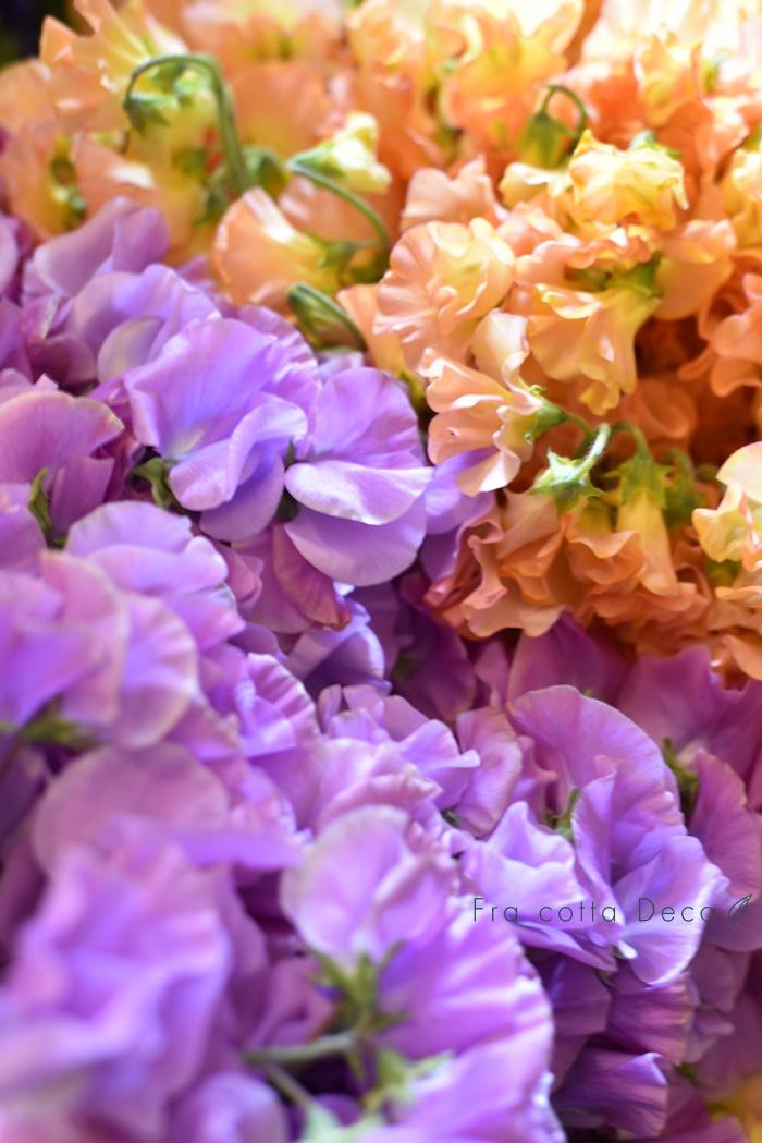 春のお花が入荷しています